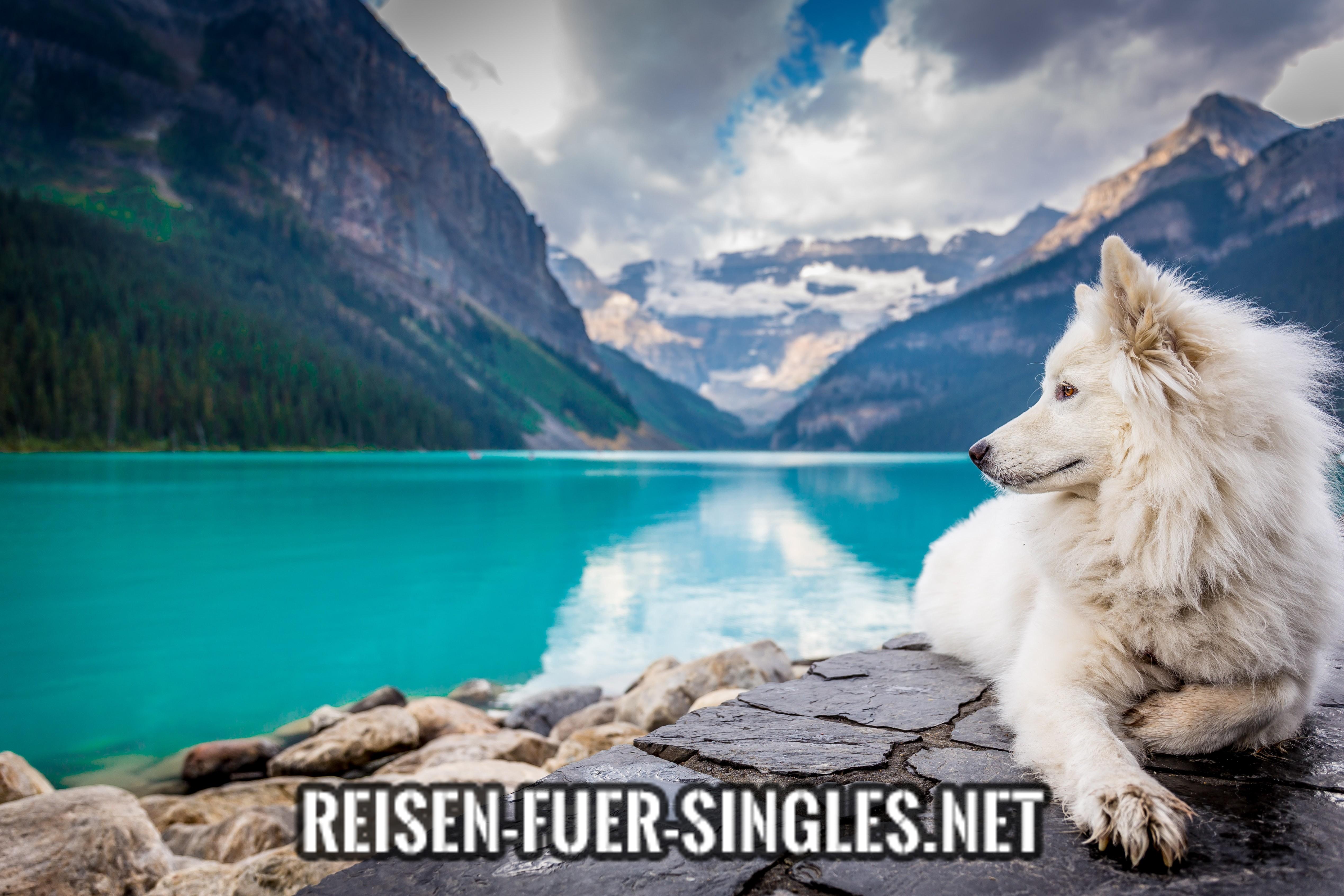 Reisen für Singles mit Hund